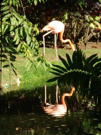 Natura Park Beach - EcoResort & Spa: Flamingo