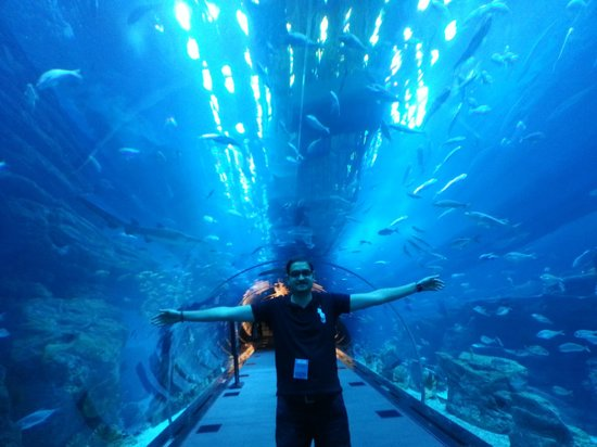 Dubai Aquarium & Underwater Zoo: welcome to Dubai Aquarium :-)