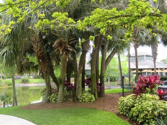 Sheraton Vistana Resort Villas- Lake Buena Vista: Beautiful Trees