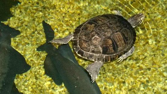 St Andrews Aquarium: Turtle