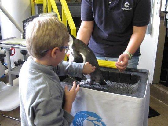 Monterey Bay Aquarium: Behide the scene with Penguin