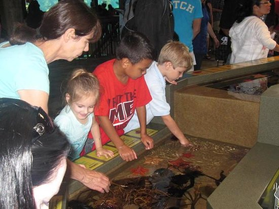 Monterey Bay Aquarium: Sting ray exhibition