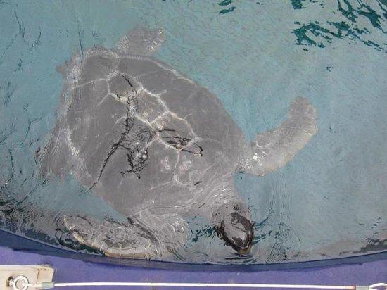 Monterey Bay Aquarium: Turtle