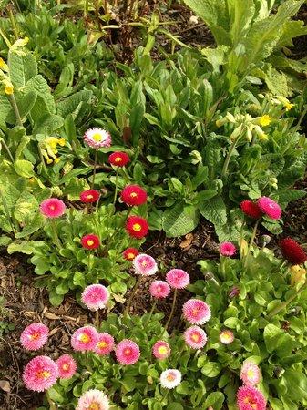 London Road Garden Annex : garden