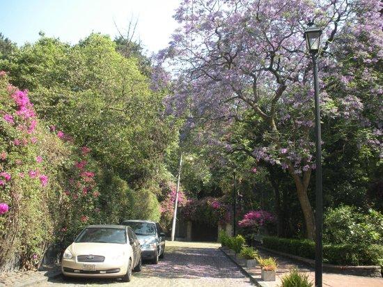 San Angel: Lots of lovely trees in this neighborhood