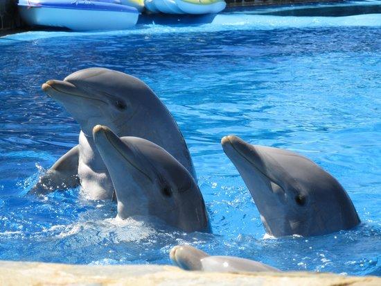 Mundomar: dolphins