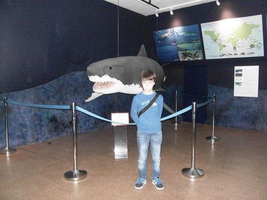 Aquarium de Biarritz : El tiburón a escala