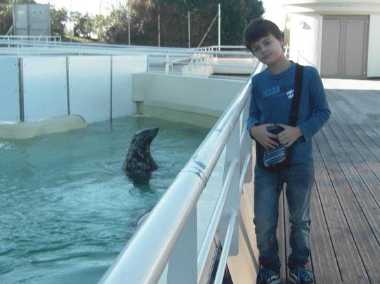Aquarium de Biarritz : Foca del museo del mar