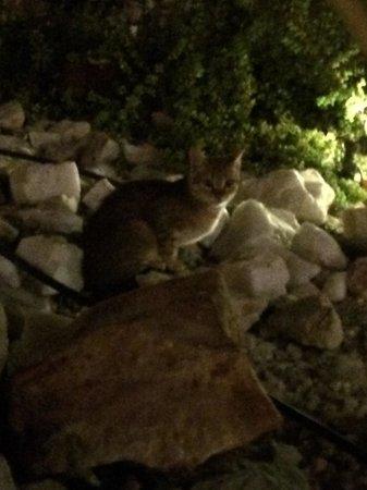 Radisson Blu Resort, El Quseir: Ecco uno dei gattini! Bellissimi! Non sono per niente fastidiosi!