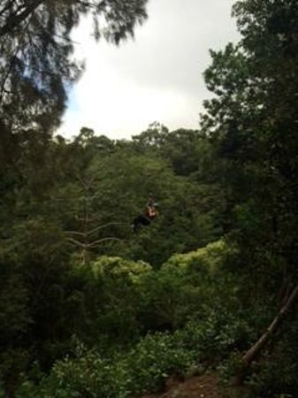 Big Island Eco Adventures II Zipline Canopy Tour: Ziplining with BIEA