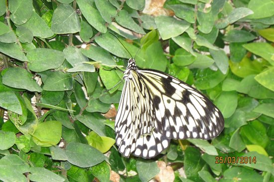 One of the inhabitants - Picture of Butterfly Park of Benalmadena, Benalmaden...