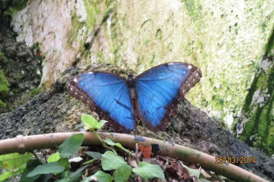 Butterfly Park of Benalmadena : One of the inhabitants