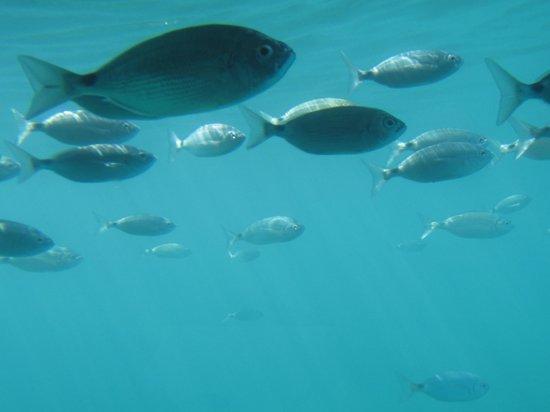 Isla de Benidorm (L'illa de Benidorm): fish on sub trip