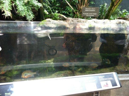 The Florida Aquarium : .