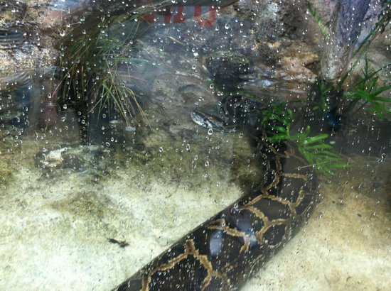 The Florida Aquarium : Snake