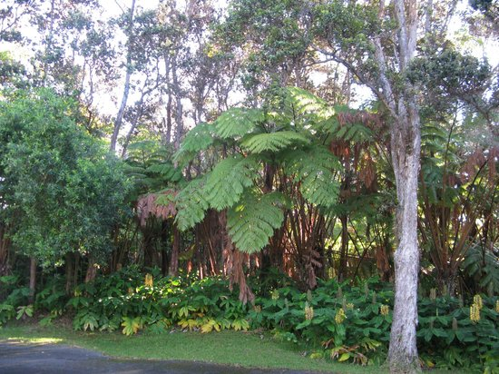 Hapu'u Fern Cottage at Volcano Village: Beautiful Landscaping