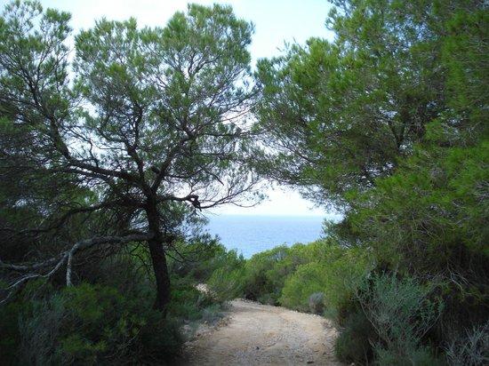 Hotel Riu La Mola : paseo por el pinar