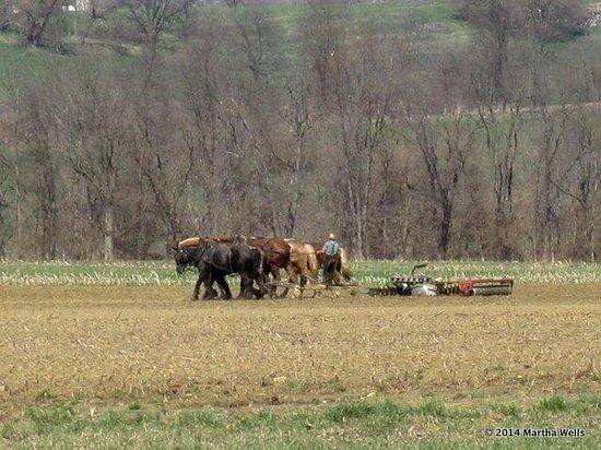 Strasburg Scooters: mule drawn plows