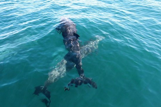 Zuma Tours: Dolphins on the way to Montezuma Taxi Boat