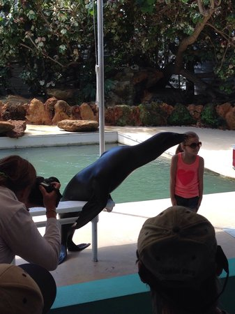 Theater of the Sea : A sea lion kiss!