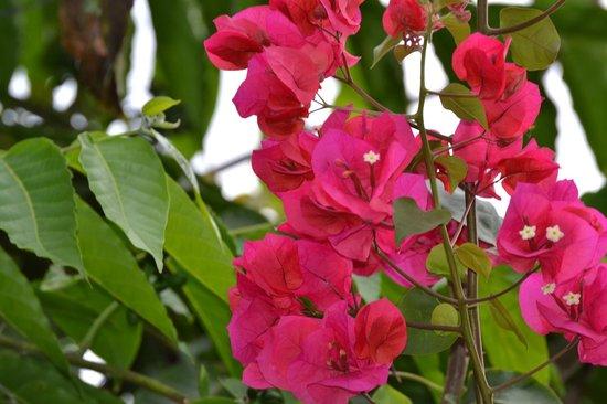 La Mariposa Hotel: Beautiful flowers all over