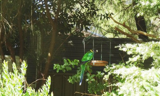 Edge of the Forest: Native Parrots are abundant