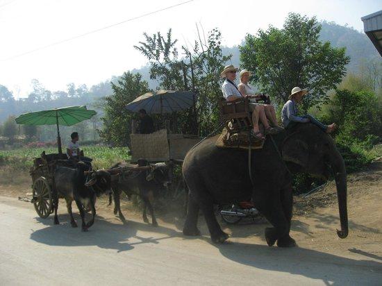Patara Elephant Farm - Private Tours : por el camino