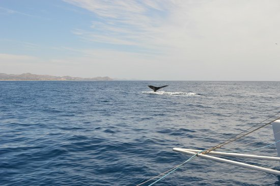 Ecocat Catamaran Tours: Whale tail in April!