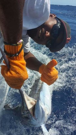 Mike's Marina Fishing Charters SRL: White Marlin 4/2014 mikes marina