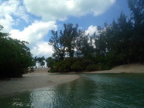 Dubois Park: Low tide
