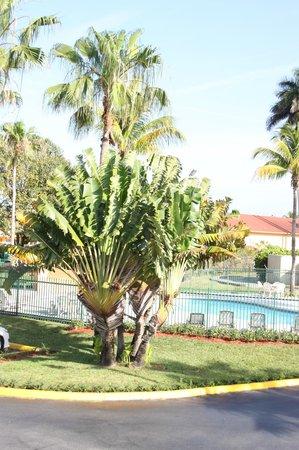 Fairway Inn Florida City : Pool view