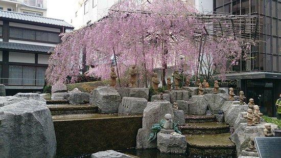 Chohoji Temple: しだれ桜が素敵!