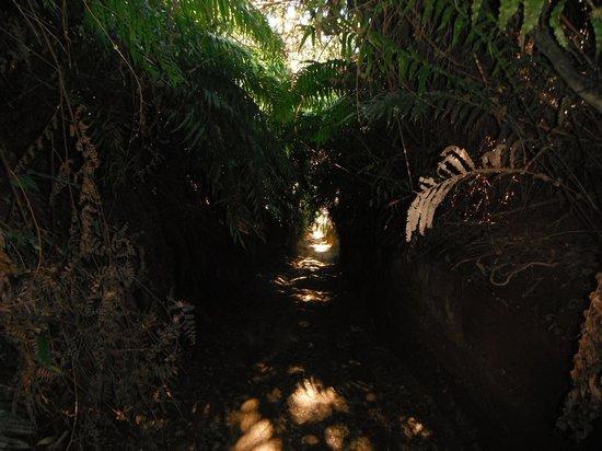 Taupo Quad Adventures: Trails