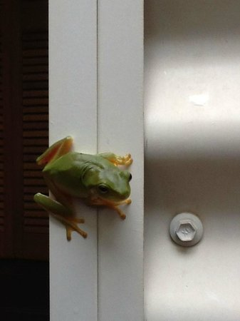 Mantra Frangipani Broome : the green frog in outside bathroom