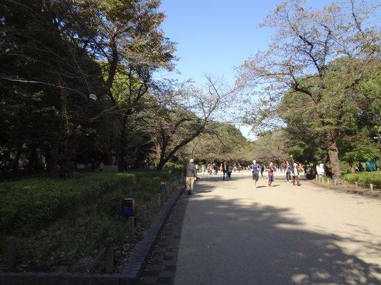 Ueno: 上野恩賜公園の様子
