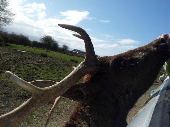 Olympic Game Farm: The feeding trough came to me!