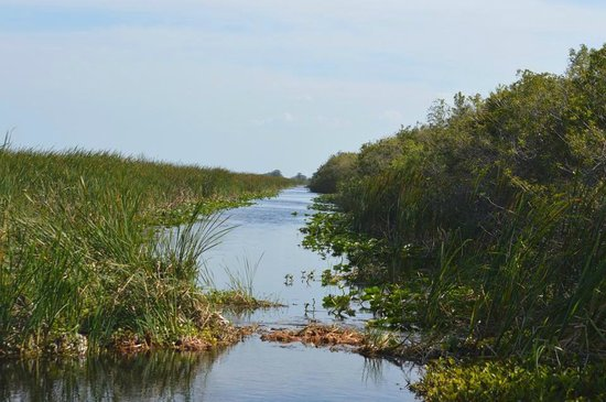 Florida Cracker Airboat Rides & Guide Service: What used to be a road! Now Flooded over and filled with Alligators