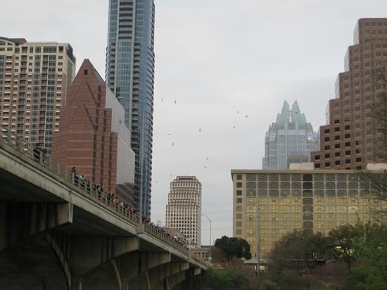 Congress Avenue Bridge / Austin Bats: Bats!