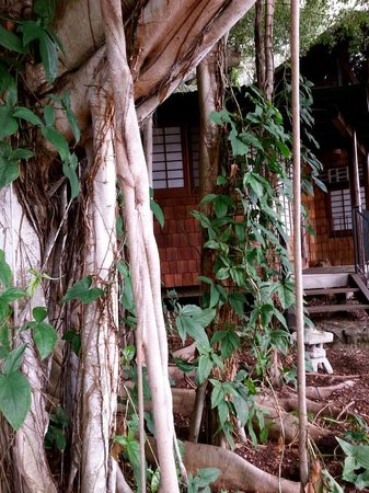 Hale Maluhia Country Inn (house of peace) Kona: Tea House