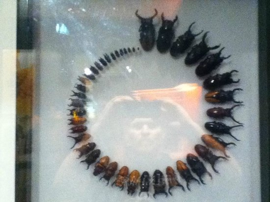 Melbourne Museum: the most abundant creature on the planet