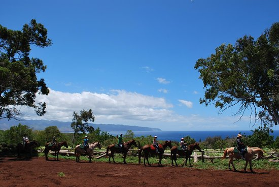 Happy Trails Hawaii: 海辺で集合写真