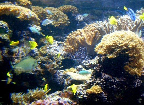 Inner Harbor: Large salt water tank & tropical fish at the National Aquarium