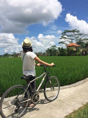 Pajar House Ubud : Rice Paddy Field nearby Kelabang Moding
