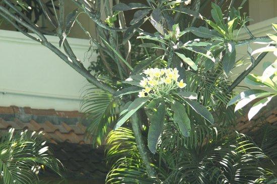 Secret Garden Inn: Lush surroundings around the pool