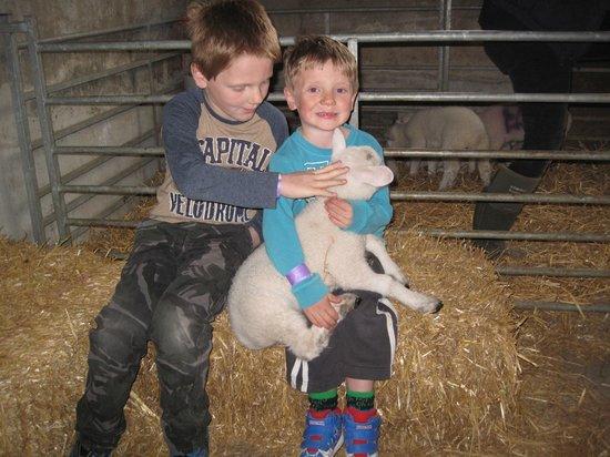 Gaston Farm: Cuddle a lamb