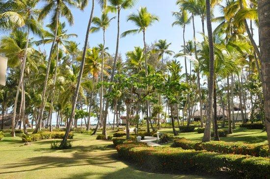 Vista Sol Punta Cana : hotel garden