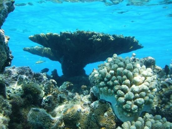 Aitutaki Adventures: Snorkeling stop