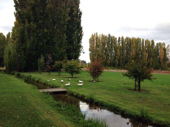 Redlands Estate: Delightful ducks