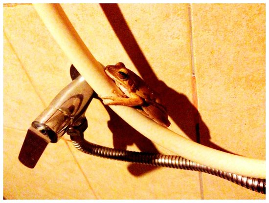 Baan Rim Nam: Little froggy friend in the shower - yes, we safed him :-)