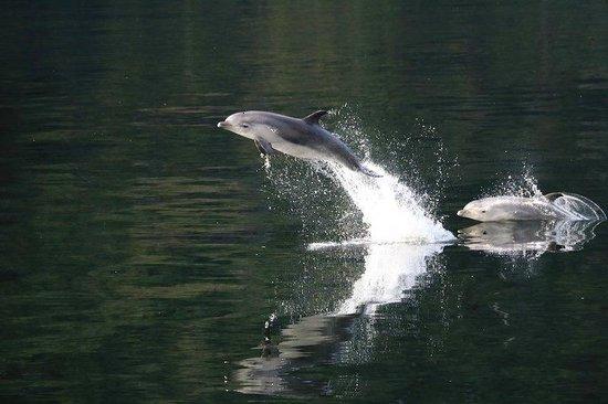 Possum Lodge : Doubtful Sound Dolphins